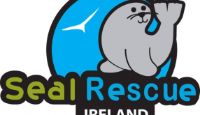 Seal Rescue Ireland - Animal Care and Education Internship